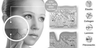 Những kiến thức cơ bản về cấu trúc và chức năng da